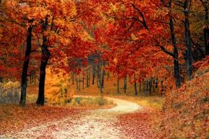 sentiero bosco autunnale